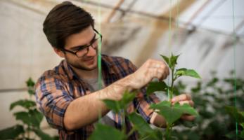 Técnico em Agronegócio analisando vegetação de perto