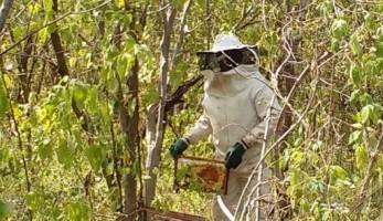 dia-de-campo-em-apicultura-3